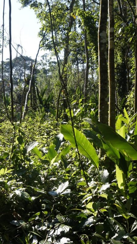 Jungle Iquitos Peru Trees Plants Green